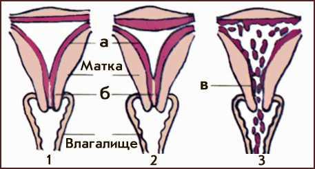 stimuliruet-li-seks-menstrualniy-tsikl