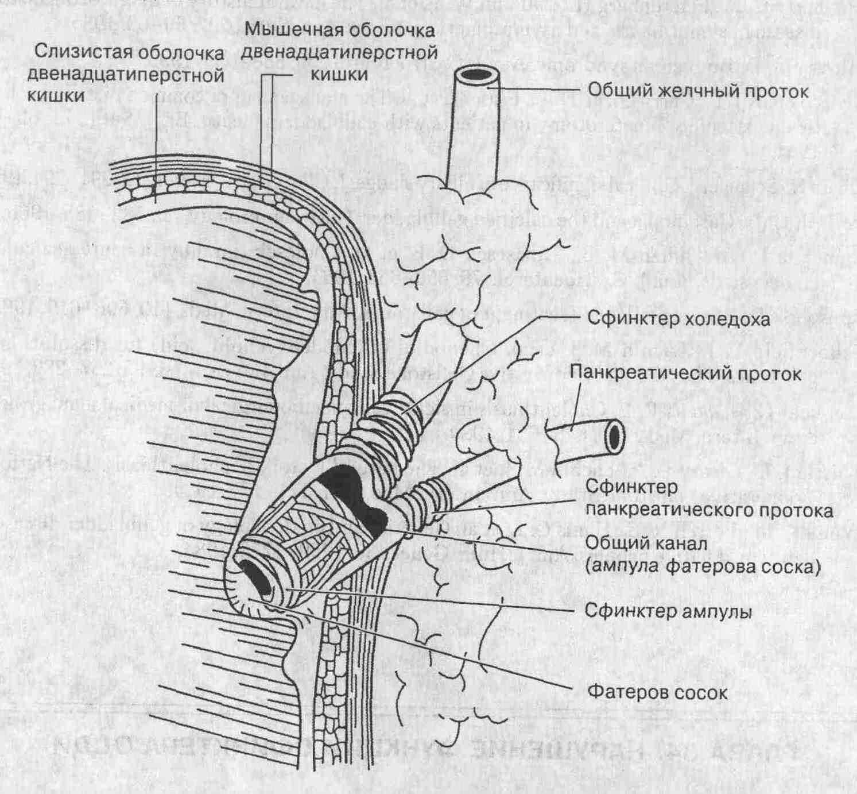 Сфинктерэктомия